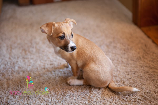 Puppies for adoption – Lucky Dog Rescue – Phoenix, AZ